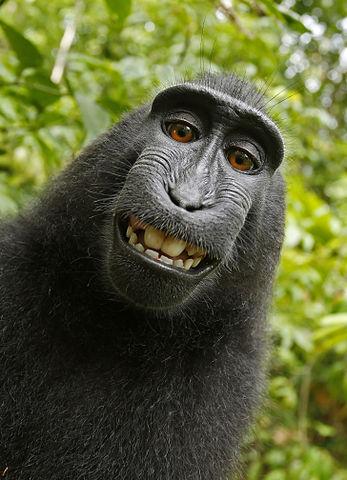 copyright selfie aap
